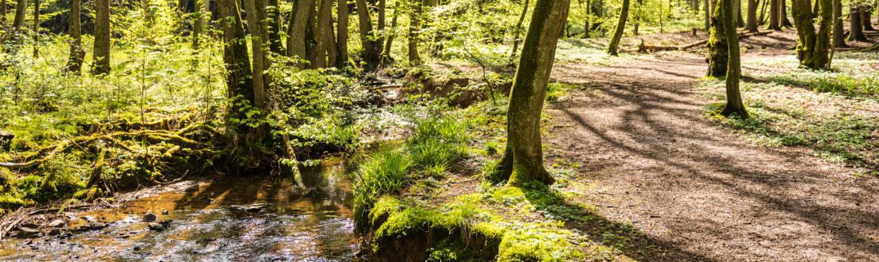 Coaching-Reise im Westerwald