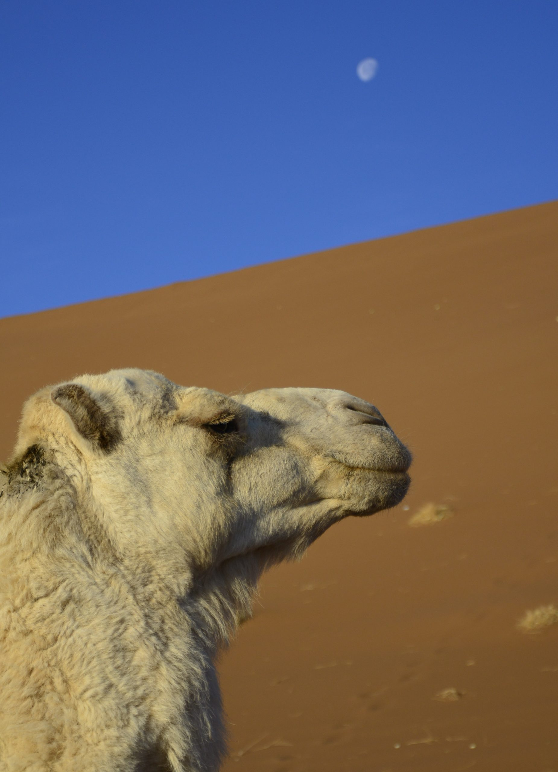 Transfer beim Wüstencoaching