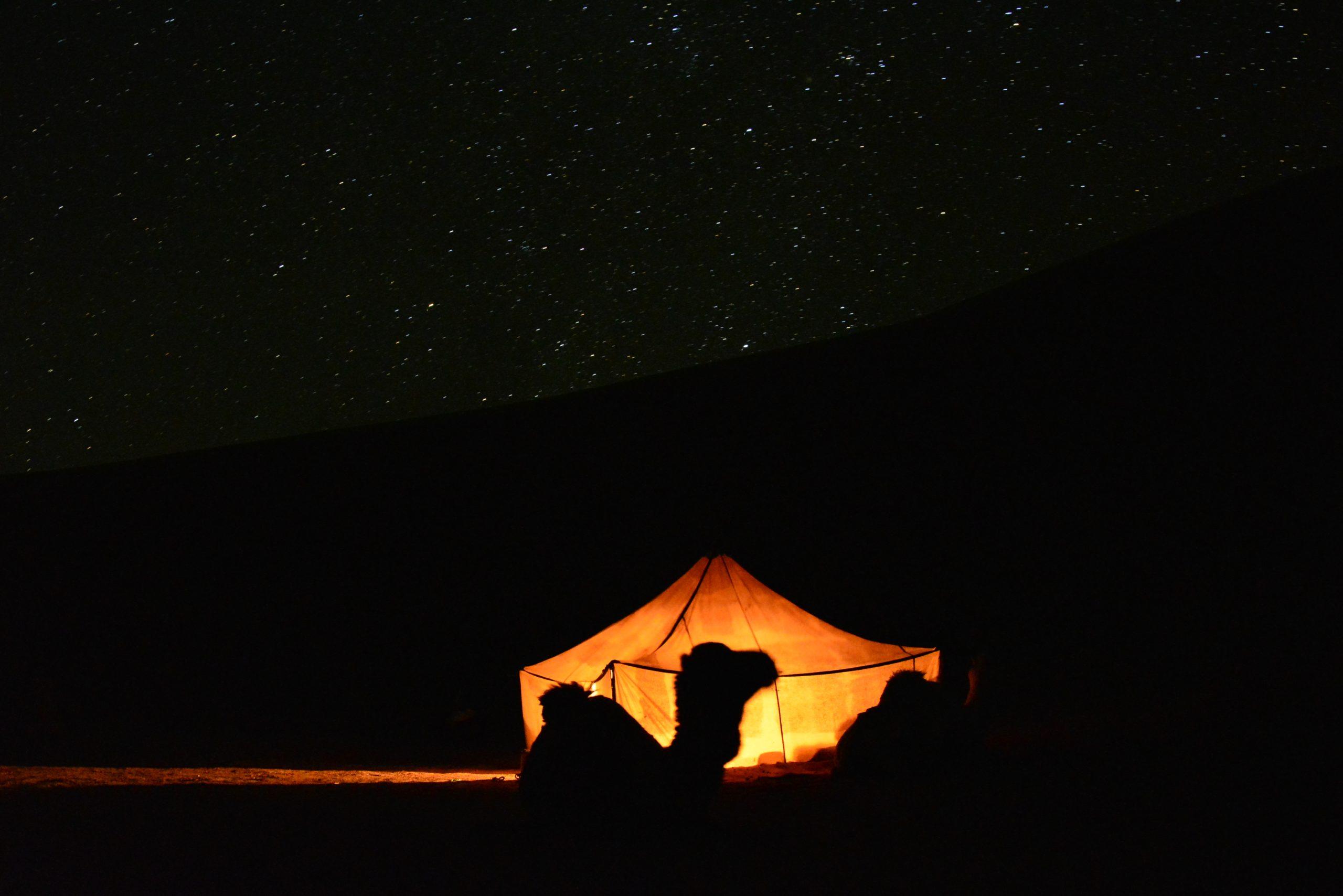 Kamel und Sternenhimmel in der Wüste