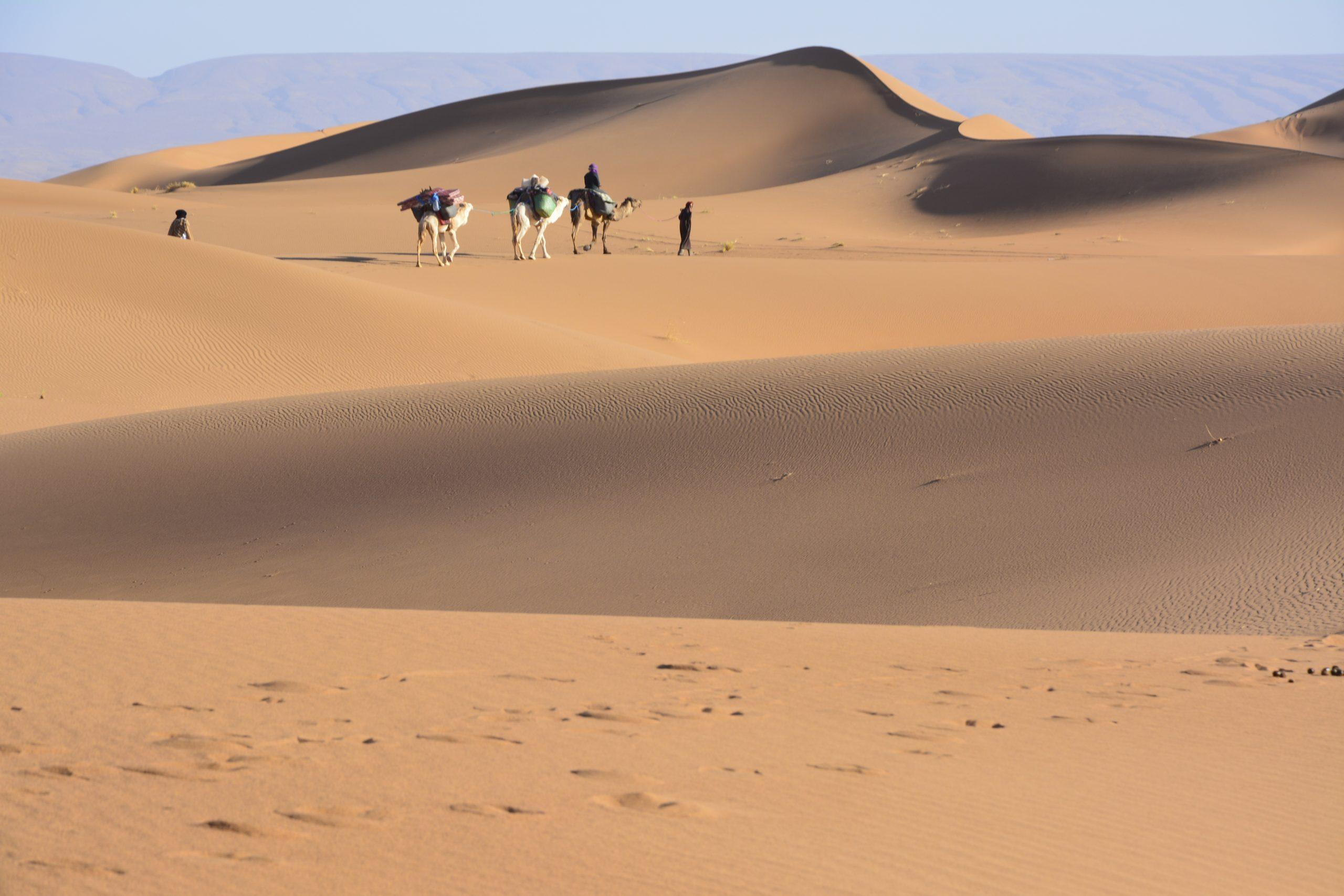 Karawane Wüsten Coaching