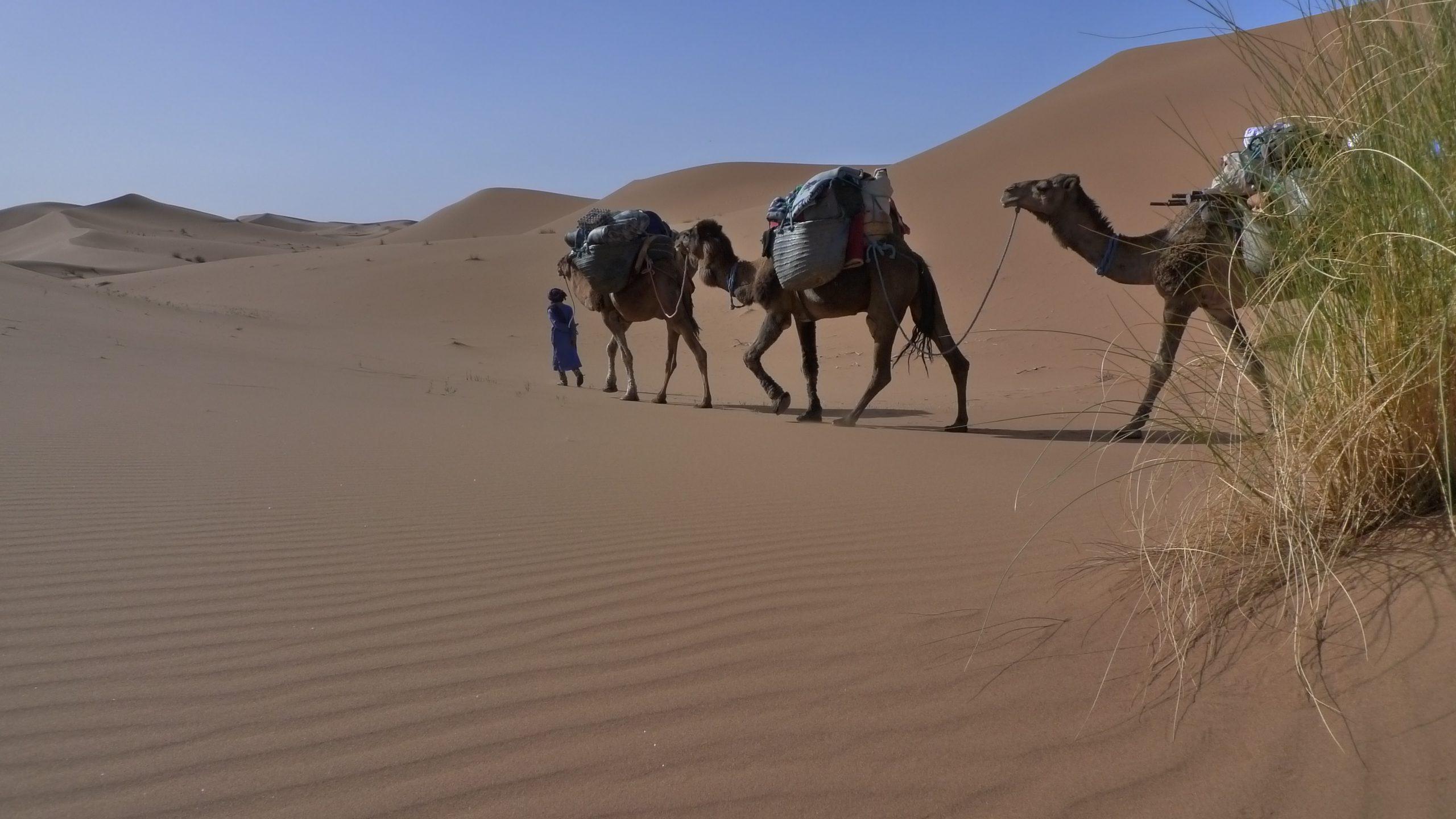 Impression Wüste
