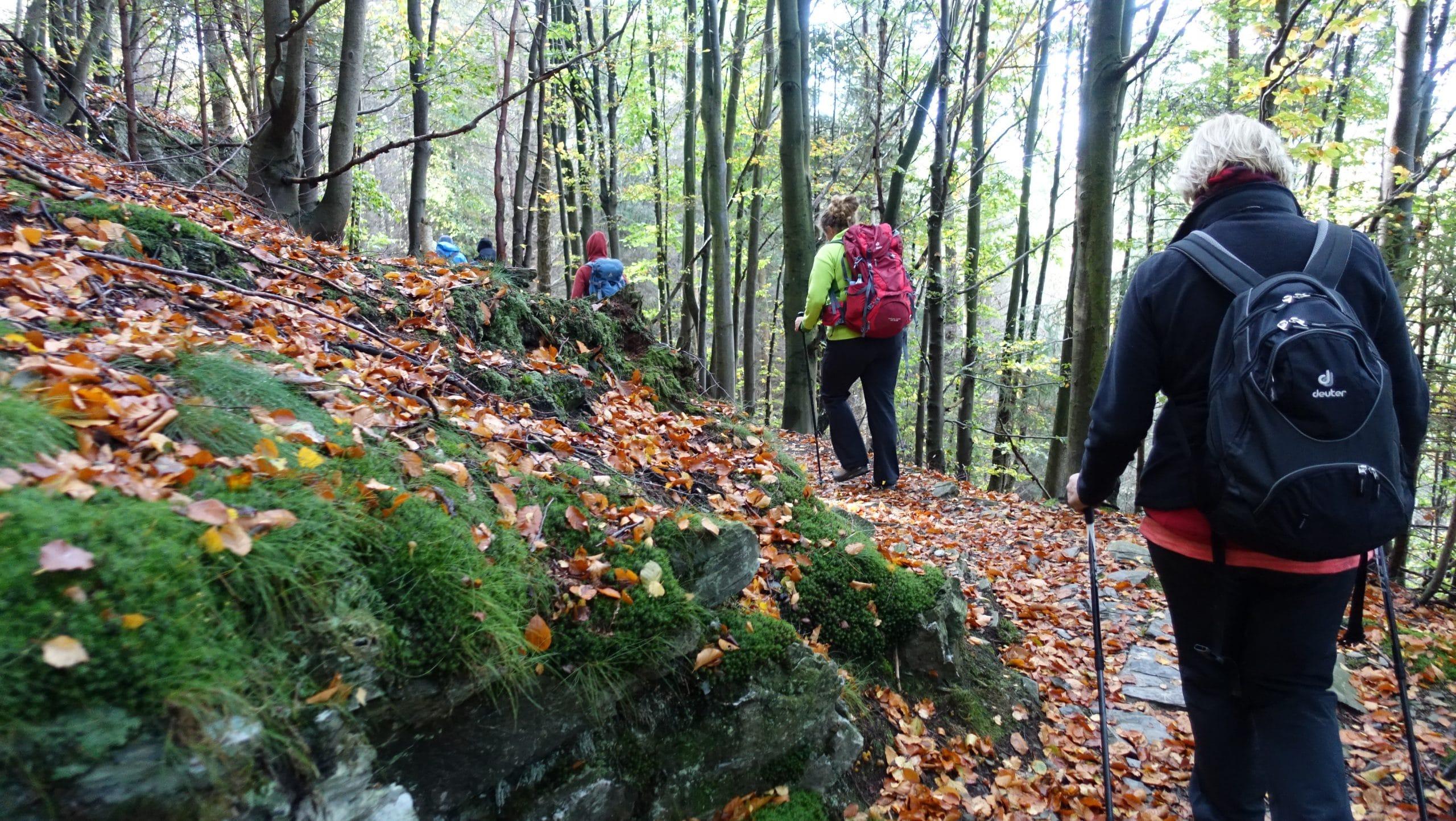 Durch den Wald 2 coaching