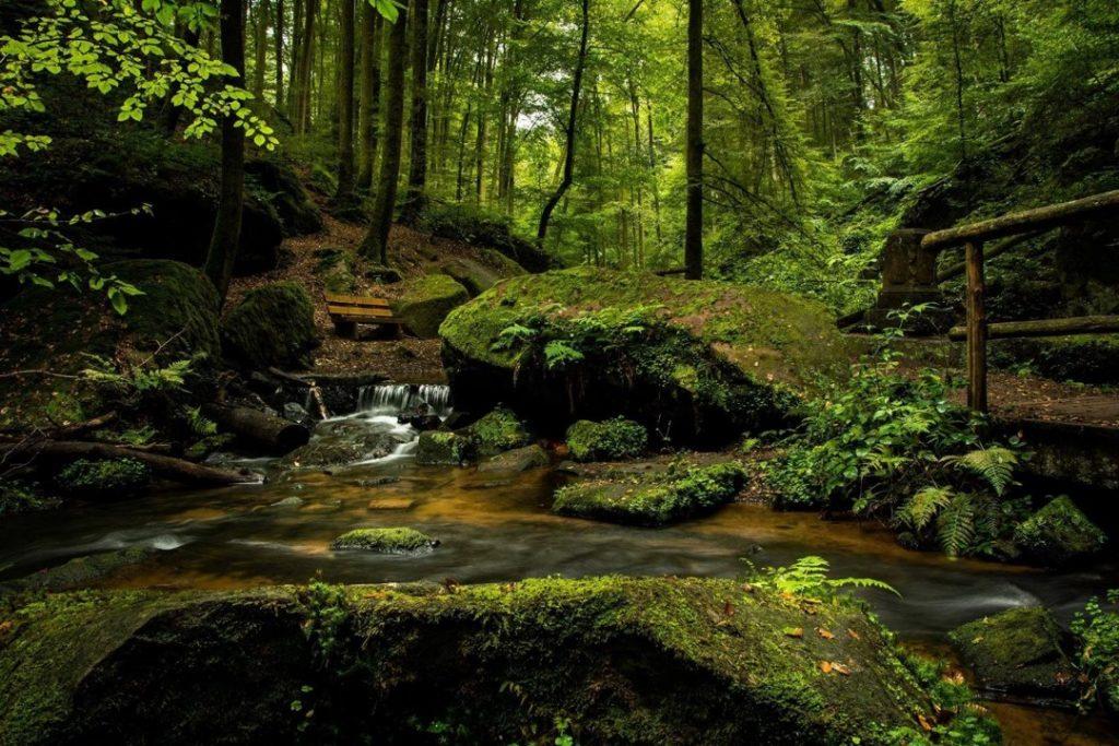 Wandercoaching-RausZeit-Weide-Eifel