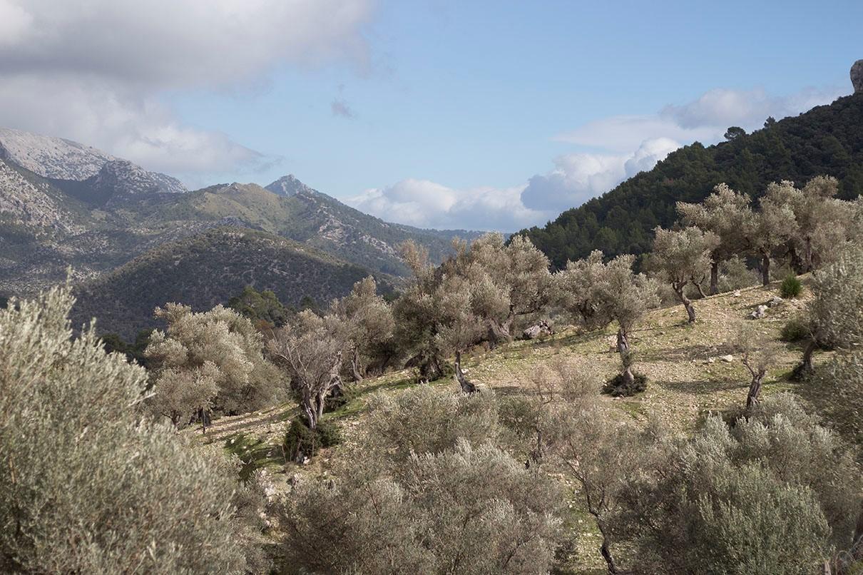 Grüne Landschaft auf Mallorca