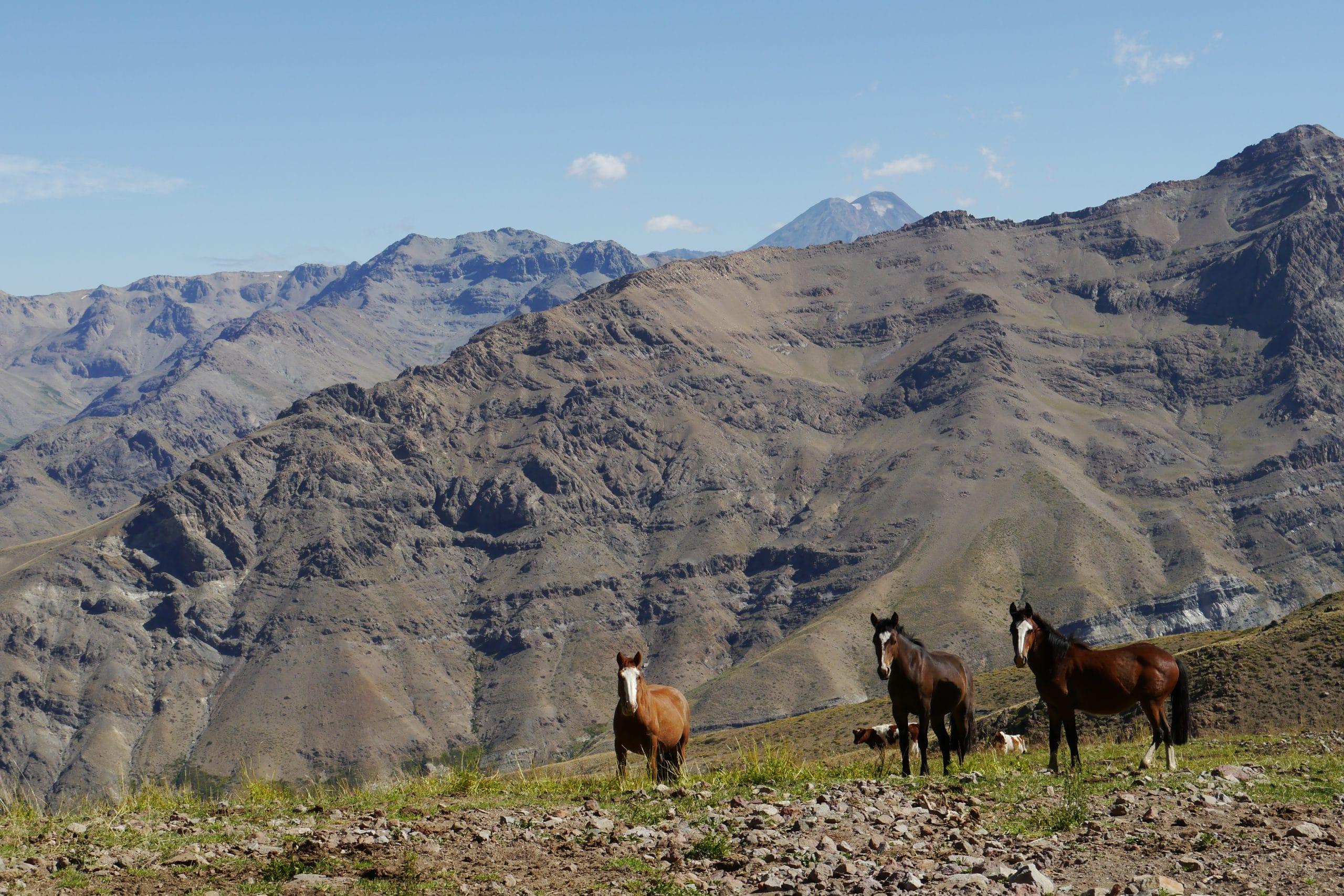 Freiheit in den Anden mit Pferden