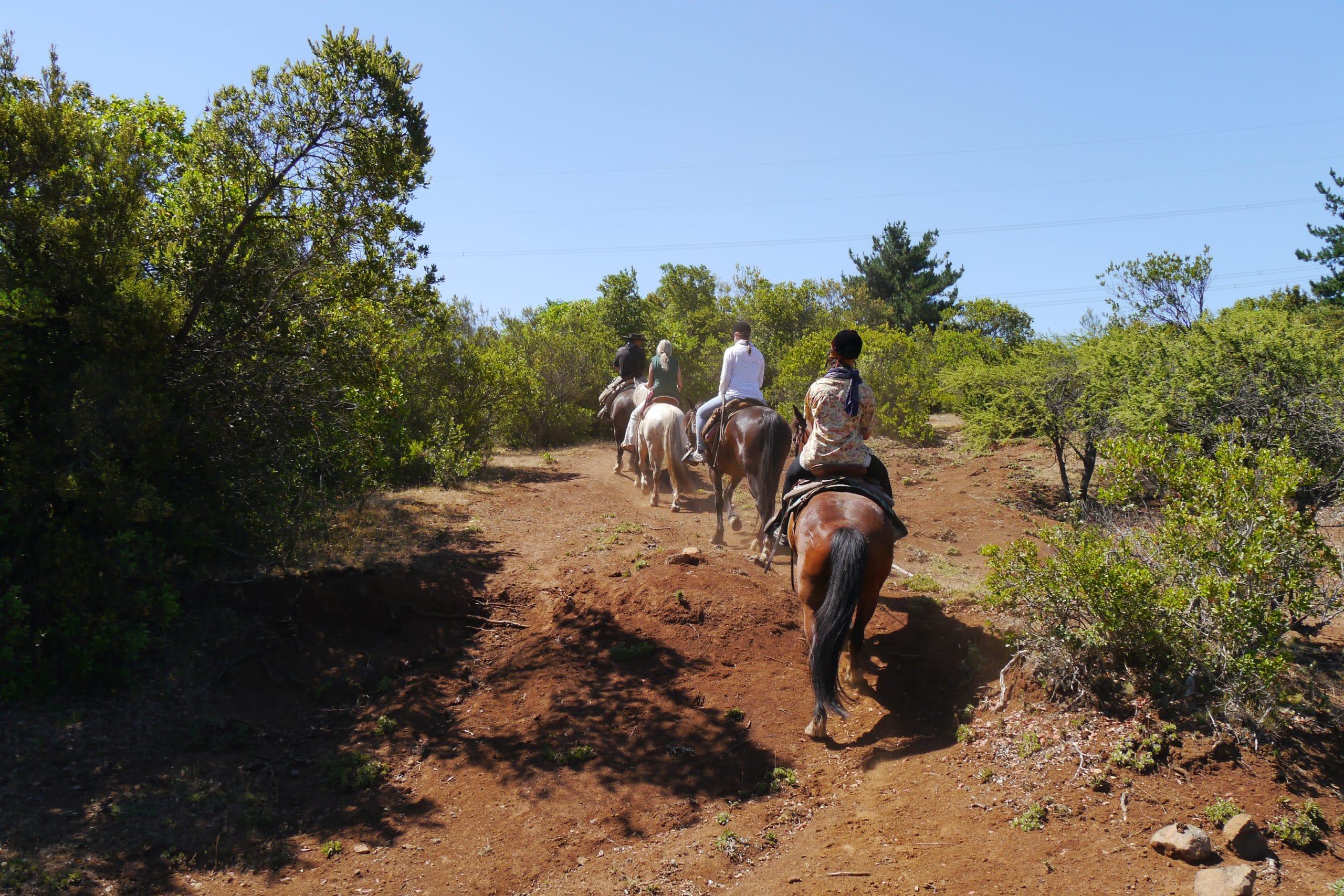 Gruppen Ausflug erste Reiterfahrungen