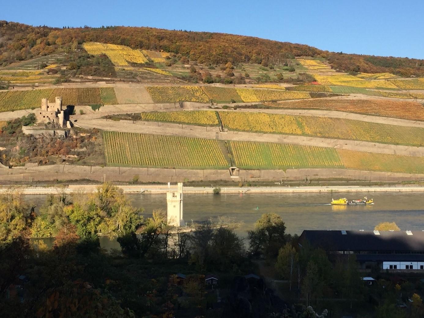 Blick auf die Weingärten des Rheintals