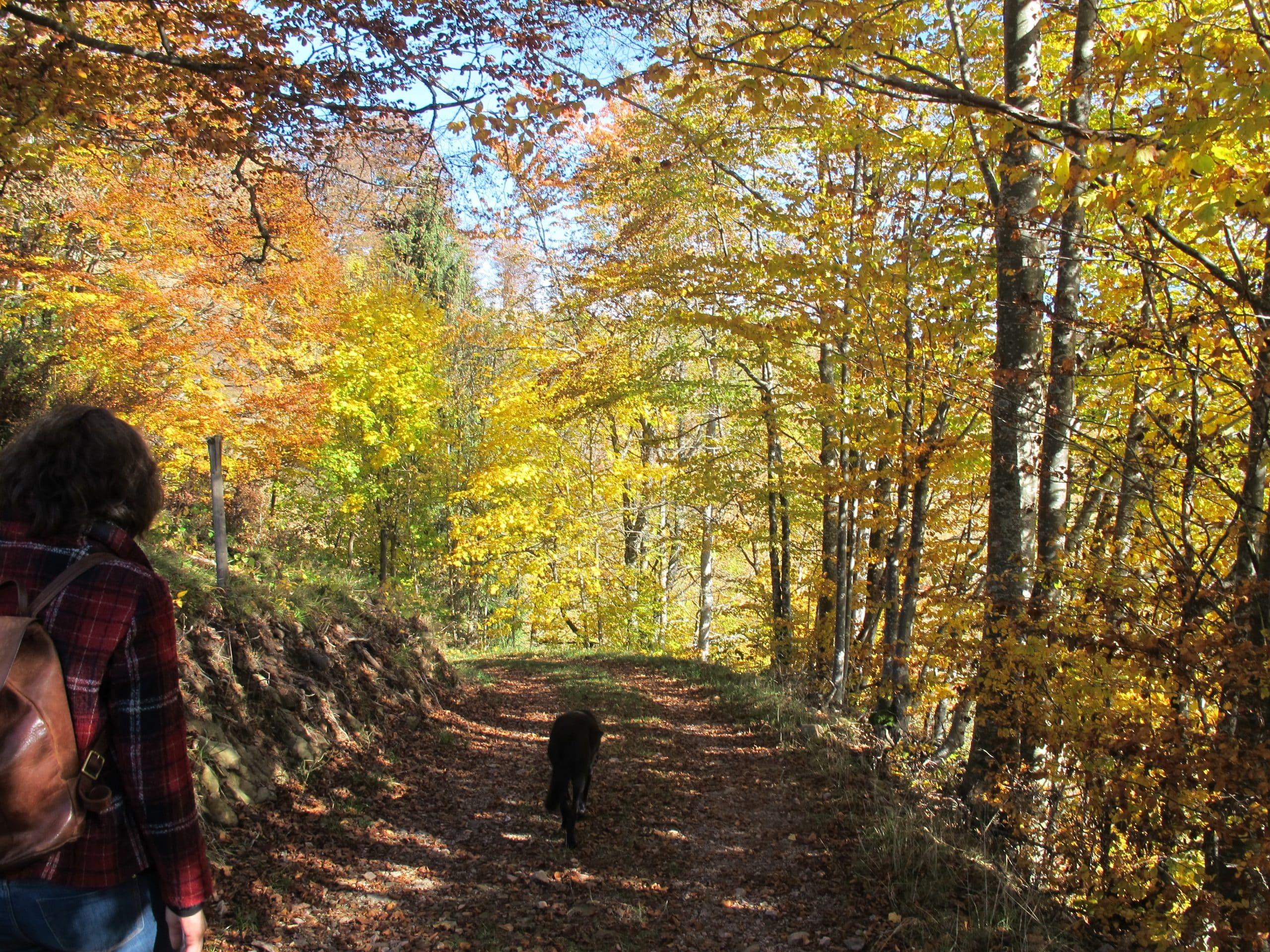 Herbstliches Atmosphere beim Wandercoaching
