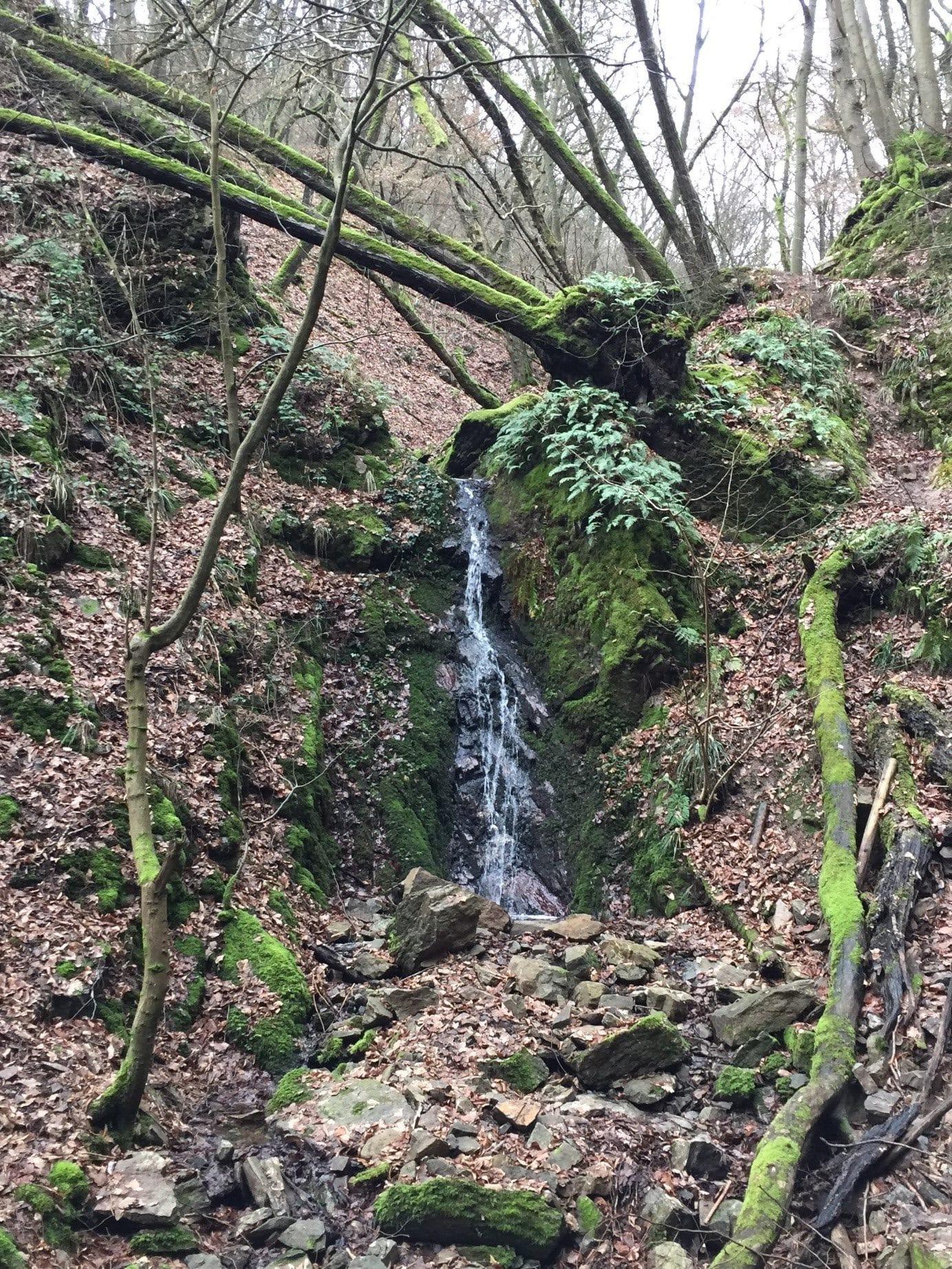 Impression zu Tagescoaching Bach im Wald