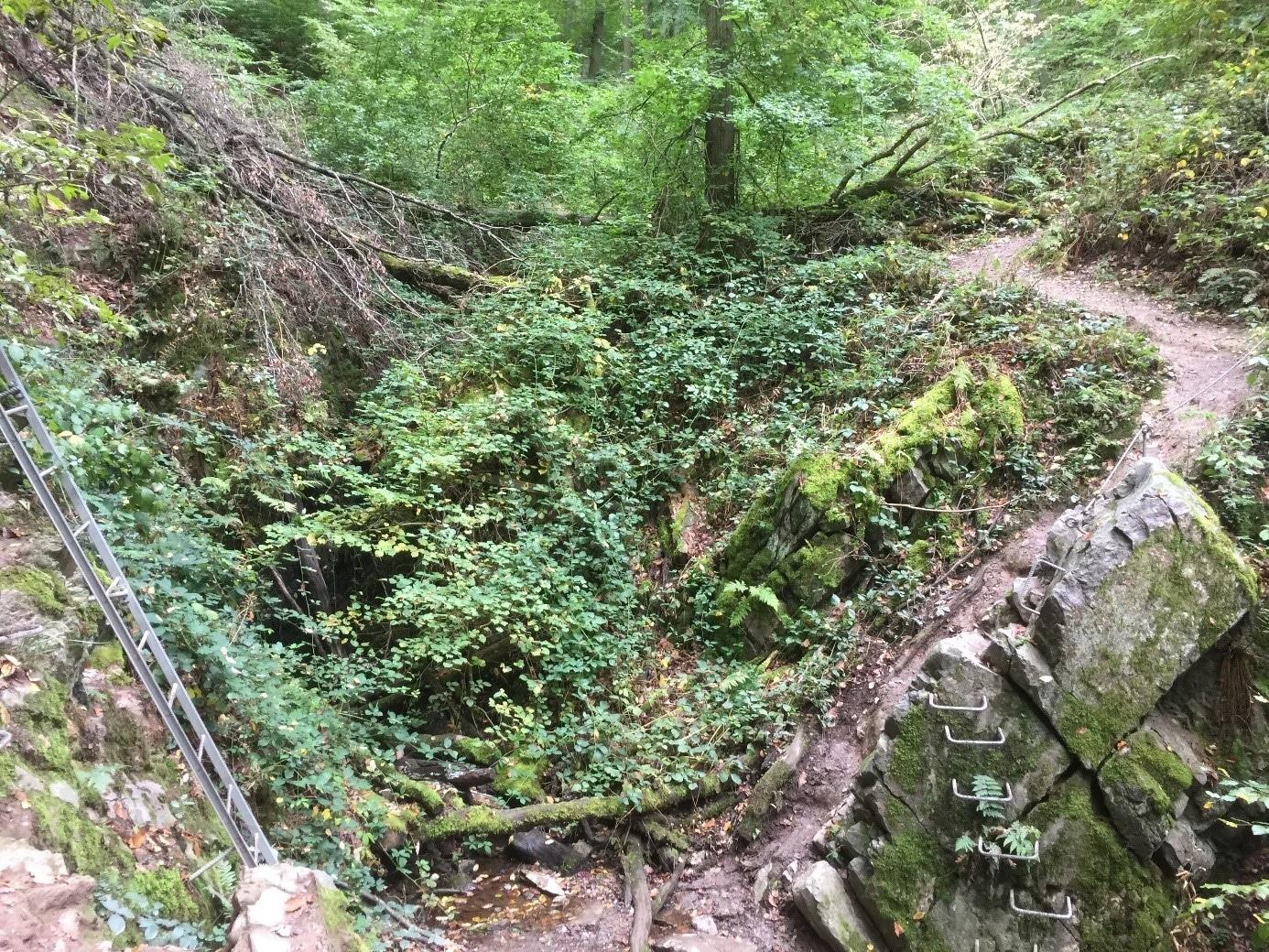 Naturcoaching im Rheintal