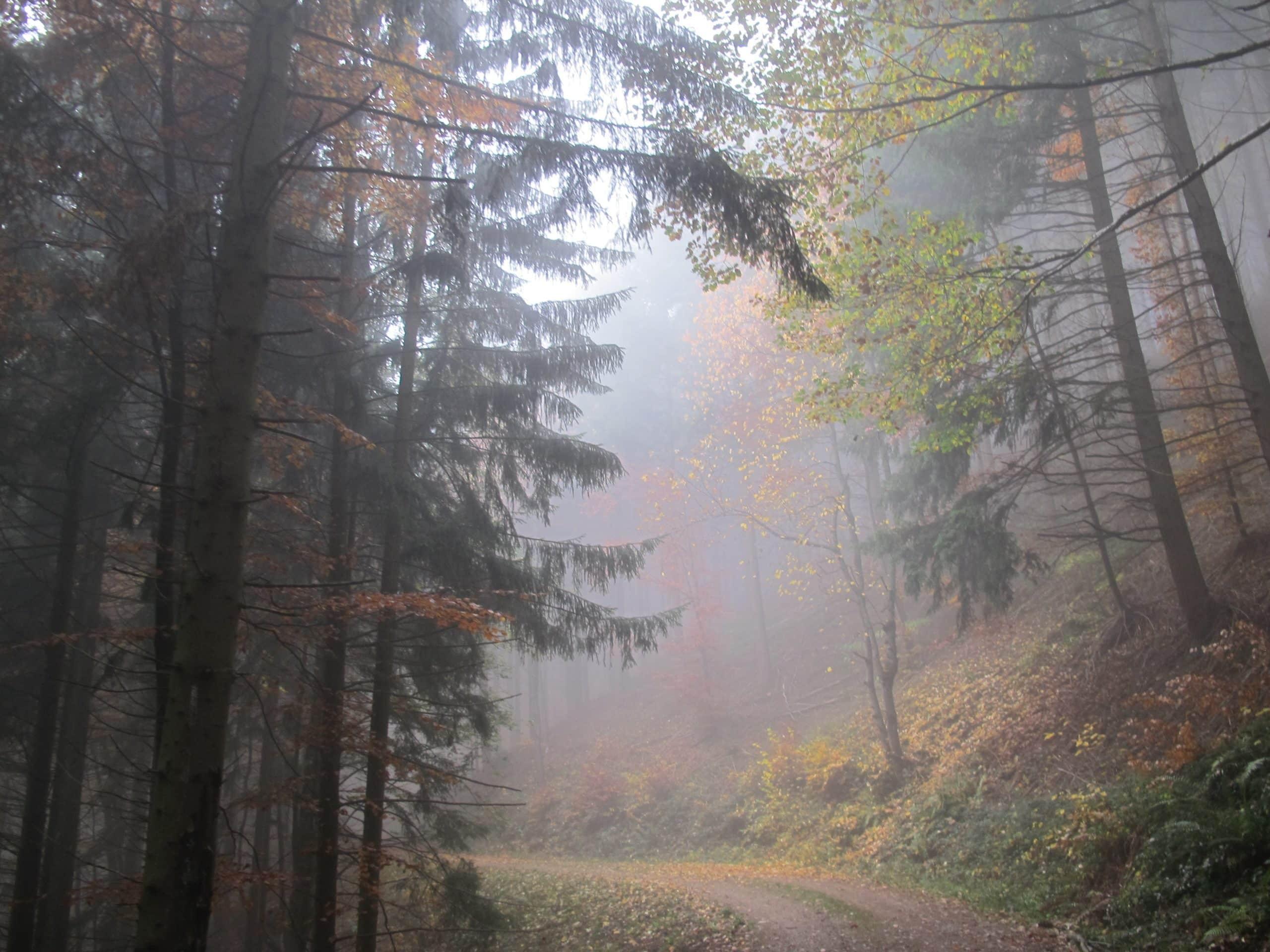 Wandercoaching durch neblige Waldkulisse